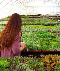 64 Best Pumice Features Blogs Photos Images Succulents