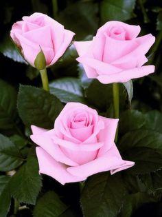 Muy bonitas flores