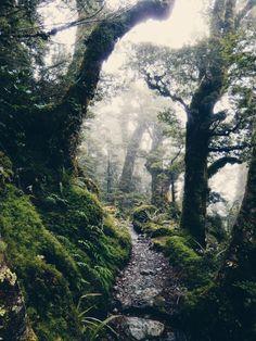 by Ellen Flipse Routeburn Track, New Zealand
