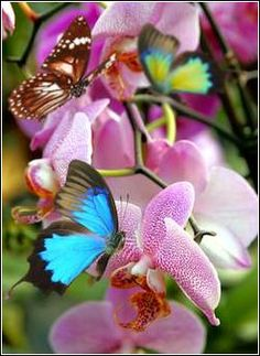 Photo about Beautiful pink orchid flower blossoms with exotic butterflies. Image of exotic, light, flora - 19011430 Blossom Flower, Flower Petals, My Flower, Flower Power, Beautiful Butterflies, Beautiful Flowers, Beautiful Pictures, Blue Butterfly, Butterfly Wings