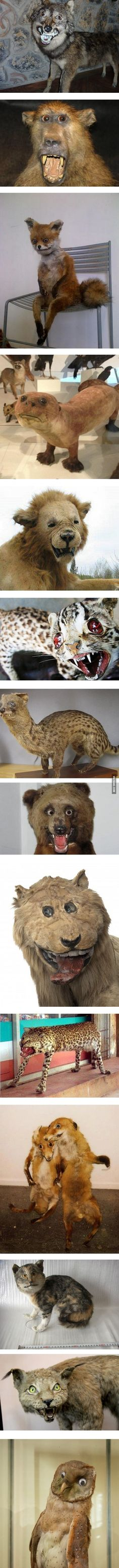 Taxidermy gone wrong - never go full retard!