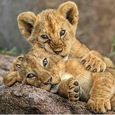 Brother's Hug.   Photography by © Alex Kirichko #WildlifePlanet