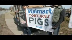 Animal rights group holds pig protest at Louisville Walmart, 3/4/13