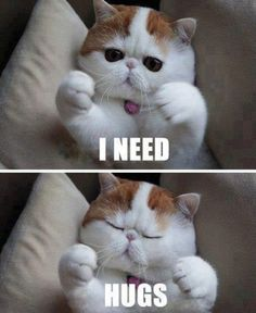 I need hugs...I would definitely hug more often if people looked as cute as this cat