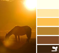 the photo is amazing...the palette is uninteresting...Design Seeds® | find your palette