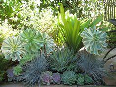 Blue fescue and succulents