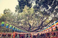 takuya ishikawa - Google+ - A Bhodi Tree in Buddhagaya. The place where Buddha sat and…