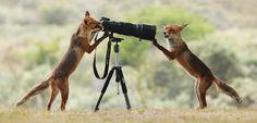 Come a little closer... by Julian Ghahreman Rad on 500px