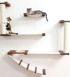 CatastrophiCreations Roman Cat Fort for Cats Multiple-Level Wall Mounted Scratch, Hammock Lounge, Play & Climbing Activity Center Furniture Cat Tree Shelves - Pets Cat Playground, Playground Design, Cat Climbing Wall, Cat Climbing Shelves, Cat Wall Shelves, Cat Bedroom, Cat Hammock, Cat Furniture, Furniture Cleaning