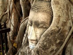#ancient #art #asian #buddha #buddhism #buddhist #culture #face #famous #fence #figure #landmark #roots #sculpture #statue