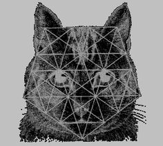 Phi / The Golden Proportion in Nature « nature's word : musings on sacred geometry Seven Trumpets, Earth Grid, Fibonacci Golden Ratio, Nature Words, Nature Nature, Magic Cat, Principles Of Design, Witch House, Cat Behavior