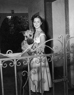 Sadly we say goodbye to Shirley Temple who died at the age of 85 this week. In honor of her memory she is our Dane Dame of the week!