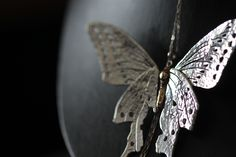 Mariposa Monarca de la Colección Animalia