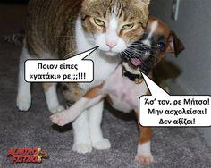 Ποιον είπες γατάκι ρε;