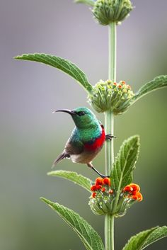 Sunbird in Still. photo by Claire Butler