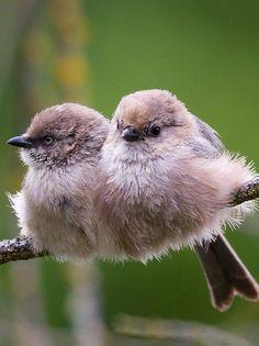 Nature Animals, Animals And Pets, Baby Animals, Cute Animals, Cute Birds, Pretty Birds, Beautiful Birds, Cute Creatures, Beautiful Creatures