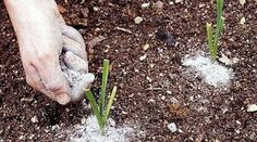 Serenity in the Garden: Wood Ash to Sweeten your Soil Plant Guide, Flower Beds, Agriculture, Garden Design, Home And Garden, Nature, Flowers, Plants, Gardening