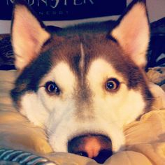 Cashes. My first born was a siberian husky.