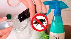 Meet the most effective mosquito REPELLENT, ecological and cheap in this video. Get Rid Of Flies, Jar Gifts, How To Get Rid, Pest Control, Spray Bottle, Clean House, Good To Know, Home Remedies, Natural Remedies