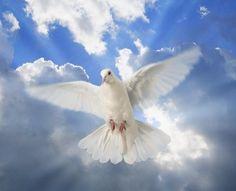 White Dove = Peace