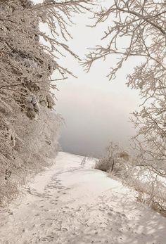 Winter whites ~ Dreamy Nature