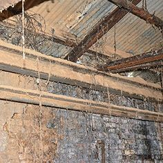 How Kill White Mold Wood Basement Removal Tips Cleaning