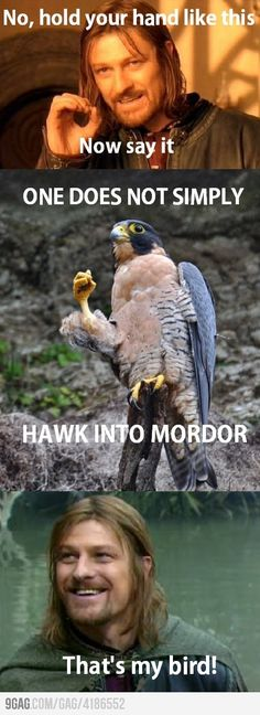 If Boromir had a bird  . . . I don't know why, but this made me laugh :]