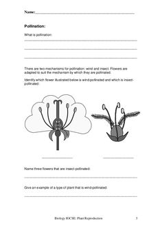 Name: Structure of a flower Label the diagram below: Complete the ...