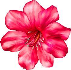 Folk Art Flowers, Vintage Flowers, Red Flowers, Flower Art, Vector Flowers, Flower Clipart, Paisley Background, Rose Flower Wallpaper, Beautiful Flowers Wallpapers