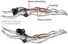 Superman exercise. Main muscles worked: Erector Spinae, Gluteus Maximus, and Hamstrings. See website for details on how to perform this exercise safely.