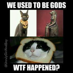Cats gods meme egyptian