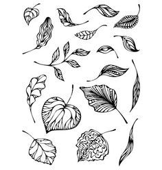 Set of leaves vector- by AlexVectors on VectorStock®