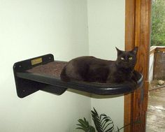 The Vertical Cat's Single Cat Shelf - Contemporary Cat Furniture, Trees, Shelves and Stairs | Our Wall Mounted Cat Climbing System