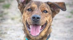 How One Picture Saved This Dog's Life | The Animal Rescue Site Blog ...my dog was nearly euthanized in a shelter (for no reason), someone luckily rescued him, I saw just one picture of him and I couldn't say no (6 years later and he is still my shadow)