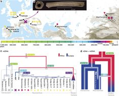 Deeply divergent archaic mitochondrial genome provides lower time boundary for African gene flow into Neanderthals Max Planck, Mitochondrial Dna, Human Genome, Dna Genealogy, Prehistory, Divergent, Anthropology, Ancestry, Family History