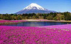 Fuji , mount
