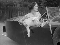 """""""September 1934: Mrs. C. Wylds behind the wheel with her pet pig at Terling in Essex."""""""