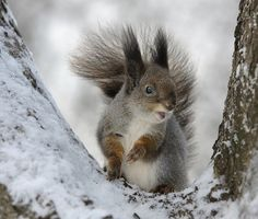 Top Ten Ways Animals Survive the Winter White Winter Coat, Warm In The Winter, Save Animals, Top Ten, Squirrel, Survival, Happy Holidays, Earth