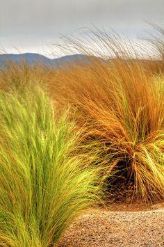 ✯ Floral landscape of desert grasses