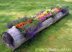 Use an old log as a planter! Flowers re-use the nutrients from the wood. #gardening #design #organic