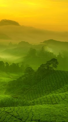 Malaysia, Cameron Highlands iPhone 5 wallpapers, backgrounds, 640 x 1136