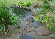stone garden path and pond surrounded by plants