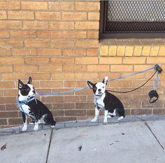 SF street art, unknown artist