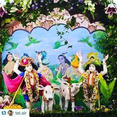 How beautiful are these sweet deities of lord Chaitanya and Nityananda  #lordchaitanya #murti #nityananda #lordnityananda #gauranga #gaurahari #cows #krsna #harekrsna #devotee #gopidolls #love #vrindavan #worship #gurudev #cute repost from @tat.air