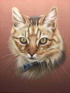 Vieux chat tigré au pastel Pastel Crayons, Pastel Pencils, Animal Drawings, Pencil Drawings, Pet Portraits, Pastel Portraits, Cat Garden, Pastel Art, Kittens Cutest