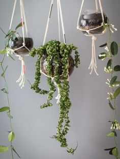 How to Make Modern Macramé Plant Hangers