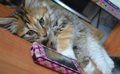 """""""My cellphone is ruining my life."""" 