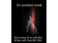 Our horses need your awareness and  action.