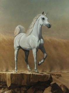 Available for sale from Sladmore Contemporary, James Gillick, Young Arabian Stallion Oil on linen, 80 × 60 in Egyptian Arabian Horses, Beautiful Arabian Horses, Arabian Art, Pretty Horses, Horse Drawings, Animal Drawings, Arabic Horse, Arabian Stallions, Horse Face