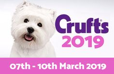 Event: Crufts 2019 – The worlds largest dog show! Worlds Largest Dog, Local Events, Dog Show, Travel Goals, Large Dogs, Sausage Dogs, Teddy Bear, Activities, Funny
